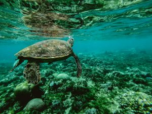 Read more about the article L'importance de prendre soin de l'océan face à la pollution